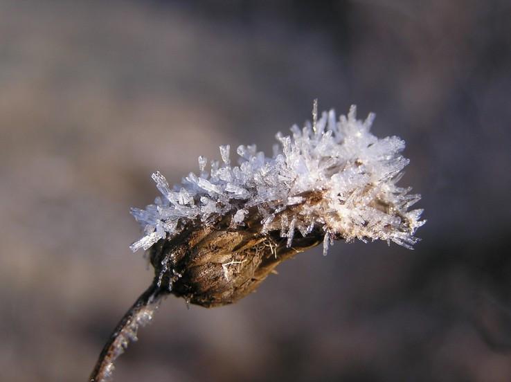 Zimné kvety