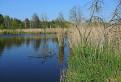 Peterské rybníky II.