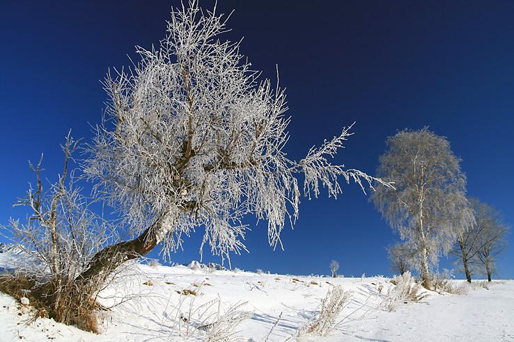 Šikmý strom a strom