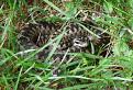 Klbko v tráve