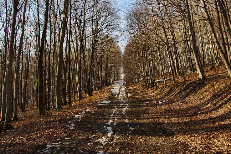 Obyčajná lesná cesta