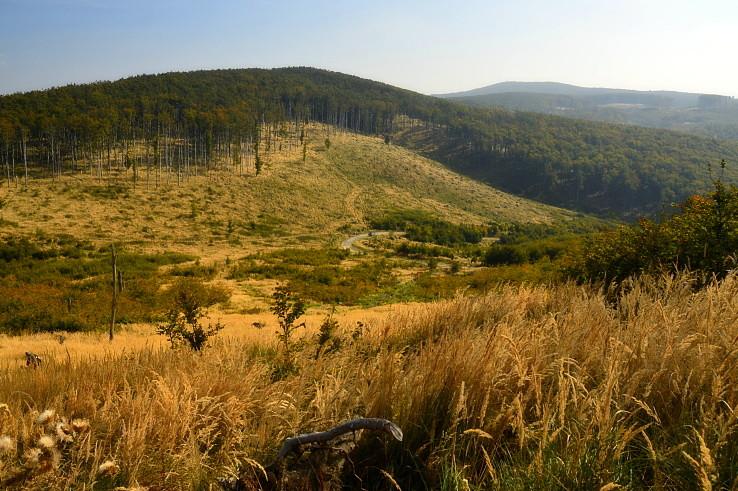 Lesy Malých Karpát
