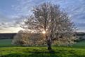 Pri strome a slnku