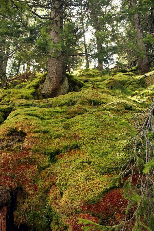 prírodný koberec