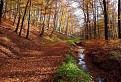 Jesenným lesom / 1.0294