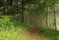 Lesy veľkofatranské...