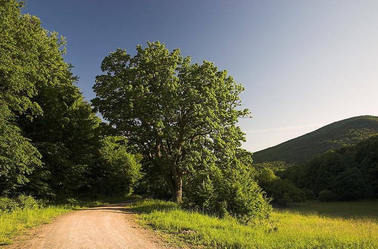 Cyklocestami Slanskými vrchmi IV