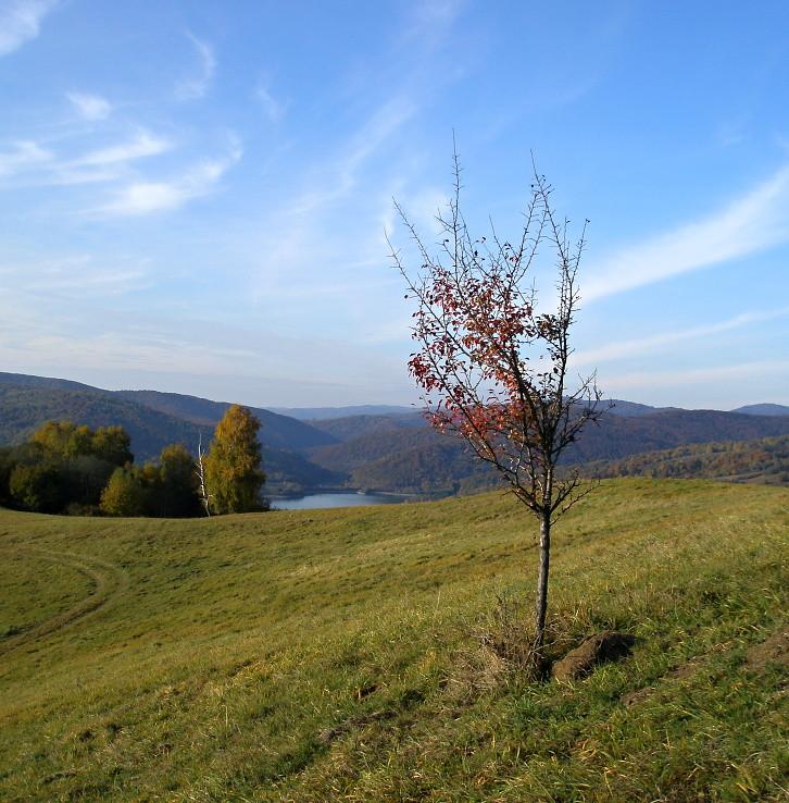 Stromček pri Starine