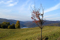 Stromček pri Starine / 1.2800