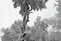 Pozerajúci strom