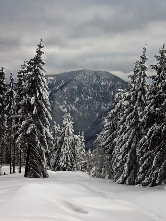 Les pod snehom V.