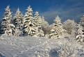 čaro zimy..