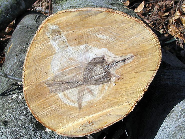 Čo sa skrýva v kmeni stromu