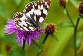 Letný neobyčajný motýľ