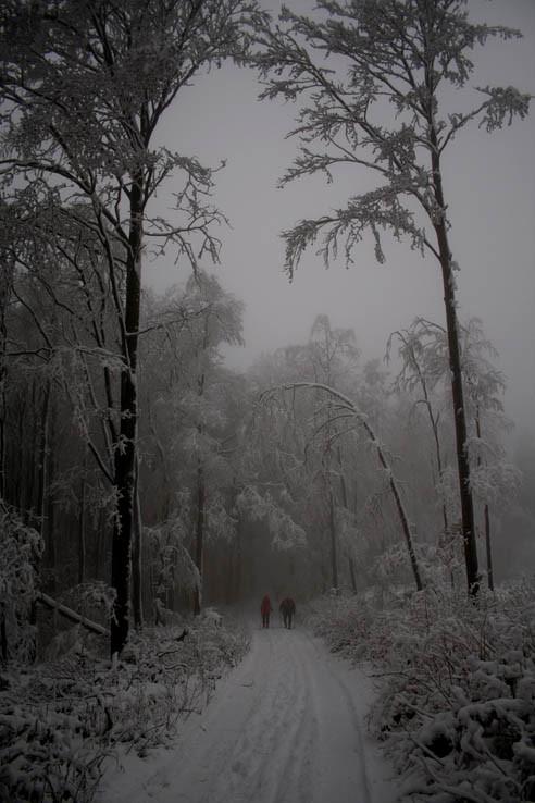 Cestou na Lajošku