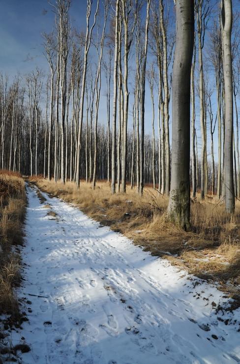 Trošku zimy v Malých Karpatoch