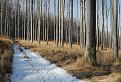 Trošku zimy v Malých Karpatoch / 1.0000