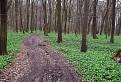 Česneková zem...