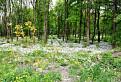 Lesík za Slovnaftom