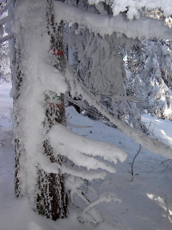 Nízkotatranská značka v zime