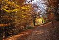 Jesenný les  / 1.0000