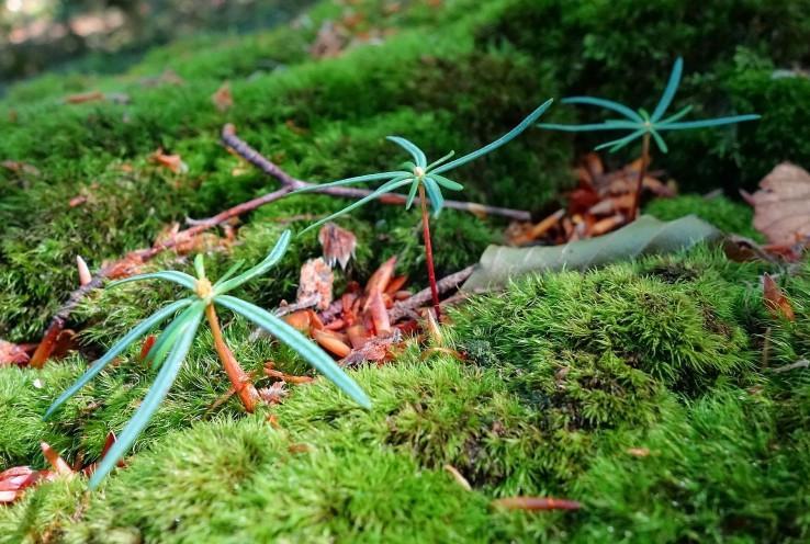 Lesík v pralese
