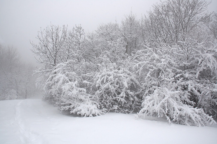 pochmúro, snežno, zahmleno