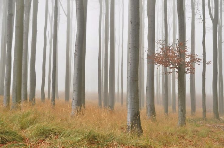 Novembrové hmly