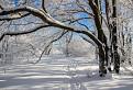 Zima na Záruboch