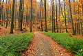 Čarovným lesným chodníčkom