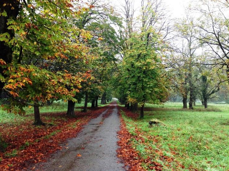Jeseň v Stupavskom parku