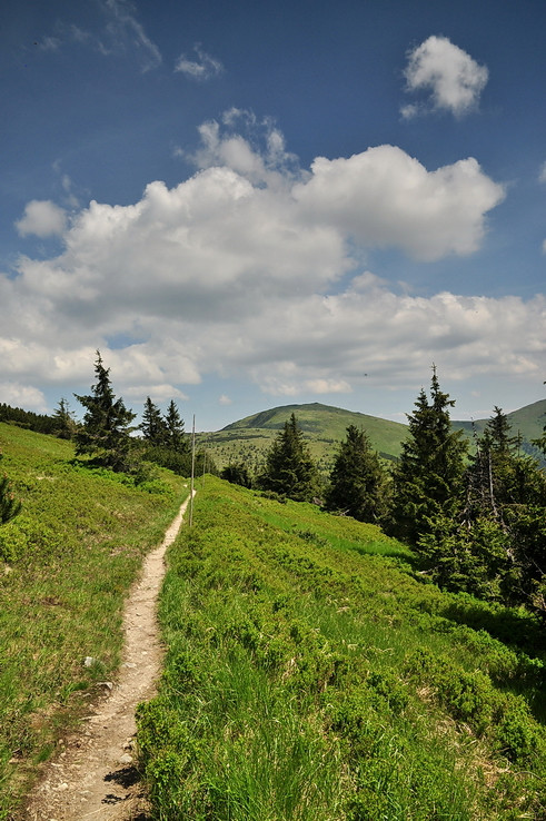 Chodníčkom smer Veľká hoľa