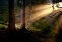 Keď slnko zobúdza les
