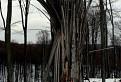 Špáratkový strom