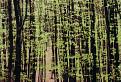 jarný pobúrkový les / 1.6250