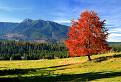 Jeseň pod Osobitou
