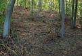 Realita v Slovenských lesoch
