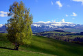 Jarná breza