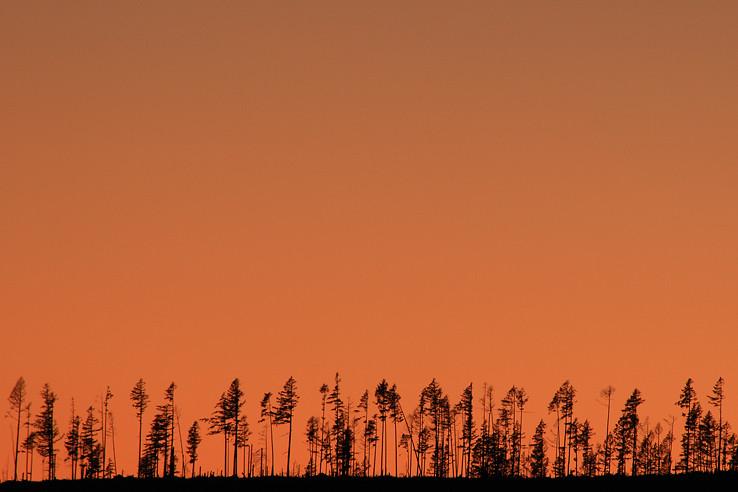 Čo ostalo z tatranského lesa