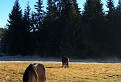 Kone z raja