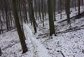 Chodníkami lesnej zveri