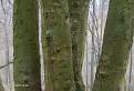 strom mapovník