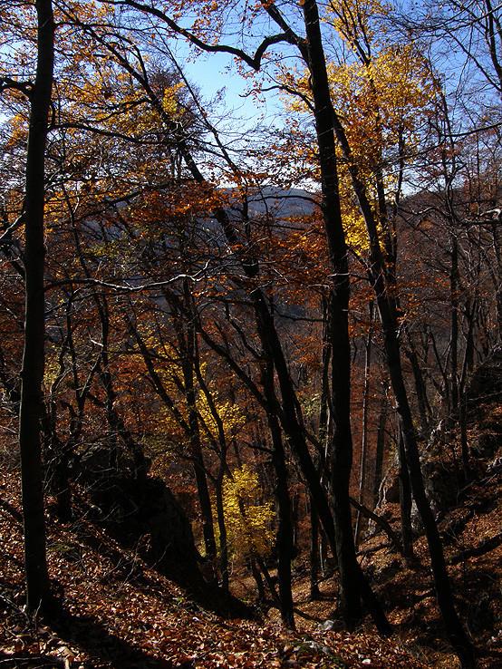 Farby podzimu