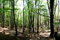 Súľovský les