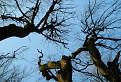 Krivé stromy na Krivoštianke / 1.0000