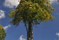 Strom a kríž / 1.0909