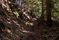 Lesným chodníčkom