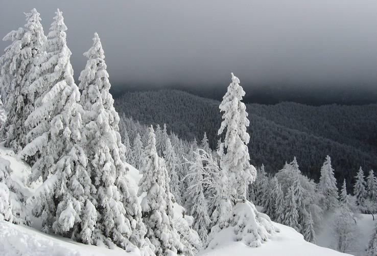 Zima na úbočiach Tlstej