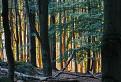 Pozlátený les