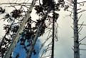 Lesný podhľad